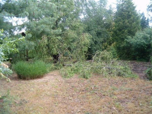 Kertépítés előtt - A kertben már csak kevés fű volt, az örökzöldek egy része elszáradt. Némi bozótirtás, fakivágás és ritkítás voltak az első tennivalók.