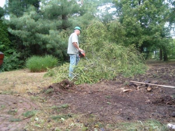 Kertépítés közben - A fakivágás eredményeként több lesz a napsütötte felület, amit a gyep jobban szeret.