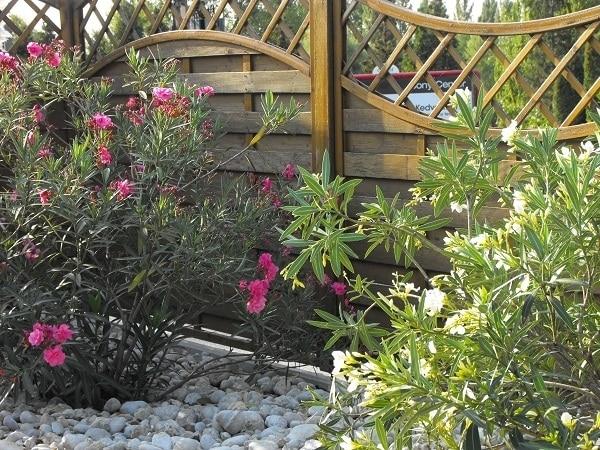 gyenesdias-mediterran-kertepites-keszthely-mellett