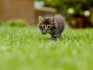 Cica a fűben